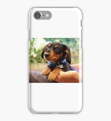 Miniature Dachshund  iPhone Case/Skin