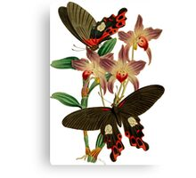 TIR-Butterfly-6 Canvas Print