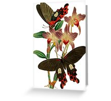 TIR-Butterfly-6 Greeting Card