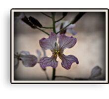 Fancy Aussie Orchid Canvas Print