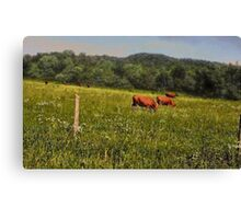 """Cattle Grazing ""... prints and products Canvas Print"