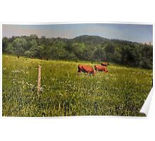 """""""Cattle Grazing """"... prints and products Poster"""