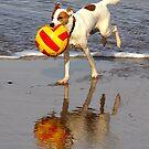 Fetch by Paul Reay