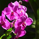 Purple Orchid by Imagery