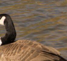 Goose Gazing Sticker