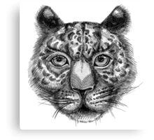 Panthera pardus, Linnaeus bw Canvas Print