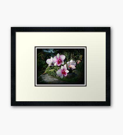 Pink Ombre` Bali Framed Print
