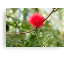 Bottle Brush Burst Canvas Print