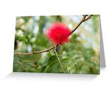 Bottle Brush Burst Greeting Card