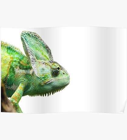 Exotic Reptile Poster
