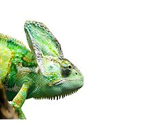 Exotic Reptile Photographic Print