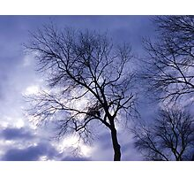 Tree and Sky Photographic Print