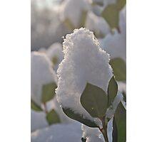 Snow Flower Photographic Print