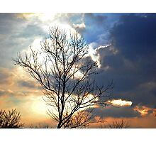 Fire Sky with Tree Photographic Print