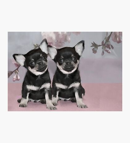 Chihuahua puppies Photographic Print