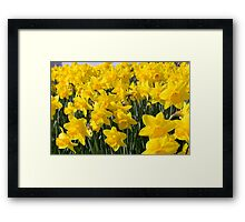 Daft about Daffs Framed Print