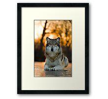 Beautiful Wolf Framed Print