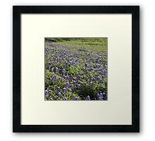 More Bluebonnets Framed Print