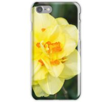 Yellow Flower Sunburst Against Green  iPhone Case/Skin