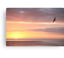 Galapagos Perfection - Limited Edition Print 1/10 Canvas Print