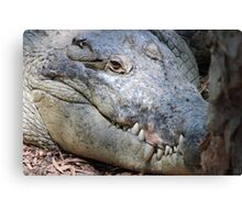 crocodile head up close Canvas Print