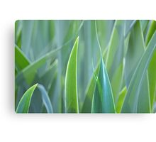 leafy monochrome Canvas Print