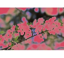 Cherry Blossom Pink Photographic Print