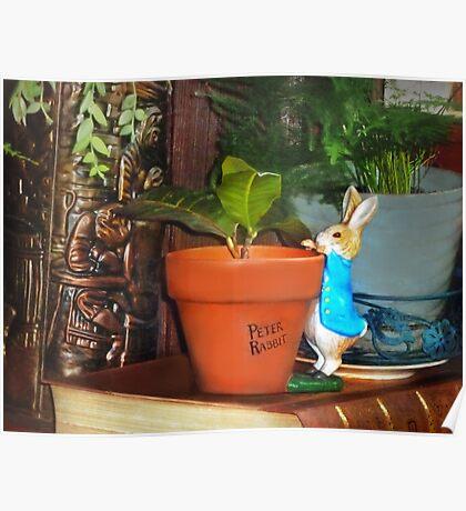 Peek-a-Boo Bunny Poster