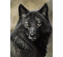 Black Wolf Photographic Print
