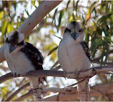 Kookaburras by MadMikkie