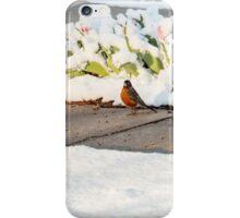 Bewildered Robin iPhone Case/Skin
