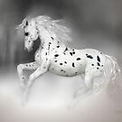 The Appaloosa'... by Valerie Anne Kelly