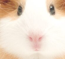 Guinea Pig with Flowers Sticker
