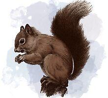 Squirrel.  by Lauren Williamson