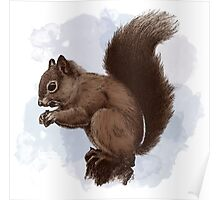 Squirrel.  Poster