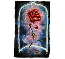 Magical Rose Photographic Print