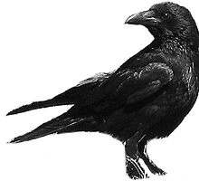 Black Crow by CitC
