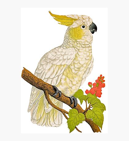 TIR-Cockatoo Photographic Print