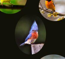 Bird lover Sticker