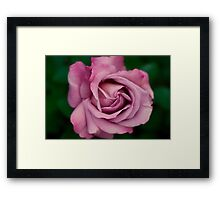 Pink Rose - Colored Pencil Drawing Framed Print