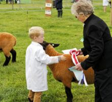 Agricultural Show sheep competition Sticker