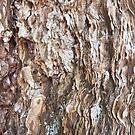 Wood 1 by Jan Vinclair