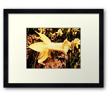 Daffodil Cheer Framed Print