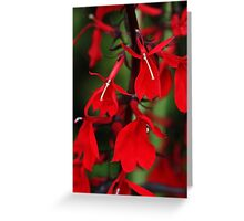 Vision In Red Greeting Card
