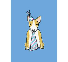 Party Hat Puppy Dog - English Bull Terrier Photographic Print