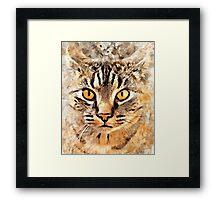 Cat Max Framed Print