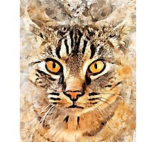Cat Max Photographic Print