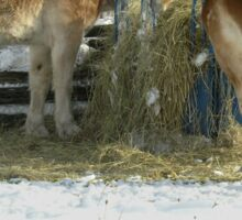 Horses in the farm. Sticker