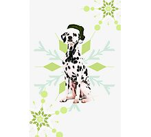 Dalmatian in a Santa Hat Holiday Dog Photographic Print