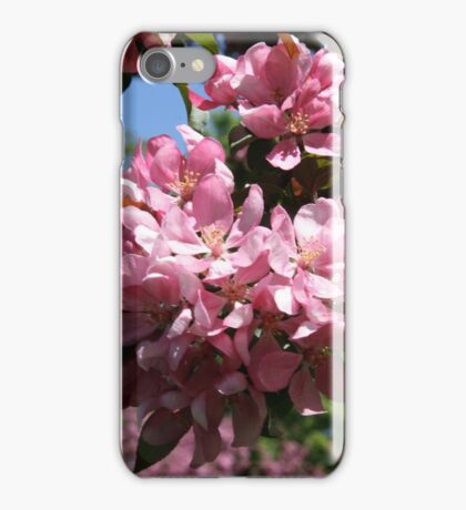 Cherry Tree Blossoms. iPhone Case/Skin